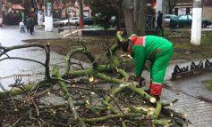 В Одессе сильный порывистый ветер ломает деревья