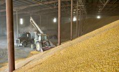 Украина занимает четвертое место по экспорту сельхозпродукции в Евросоюз