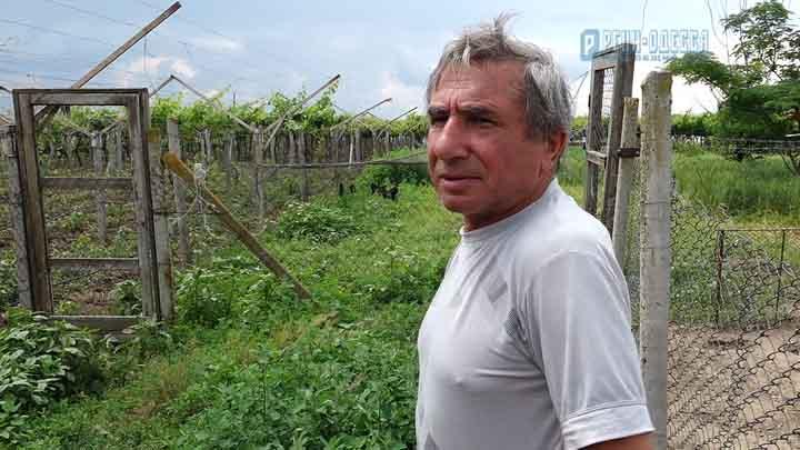 В Рени фермеры закрывают бизнес из-за потерь от засухи