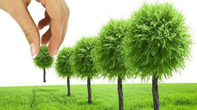 В Килийской ОТГ общественники призывают устроить озеленительную акцию