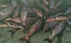 Близ Рени браконьеры наловили в Дунае рыбы на 28 тысяч