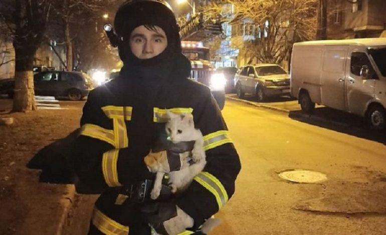 Март на дворе: в Одесской области спасали застрявших на высоте котов