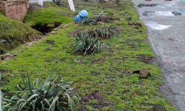 Возле центральной площади Арциза высадили экзотические растения (фотофакт)