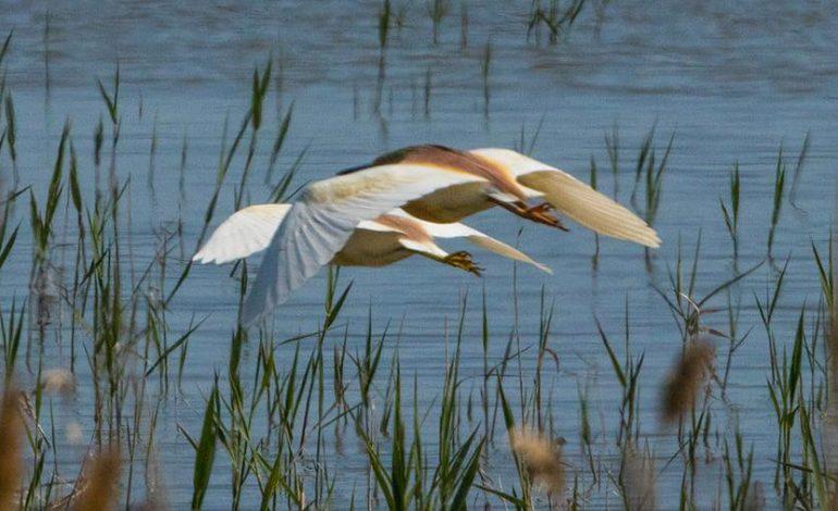 На юге Одесской области замечены редкие перелетные птицы (фото)