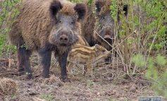 В Одесской области пересчитали охотничьих животных