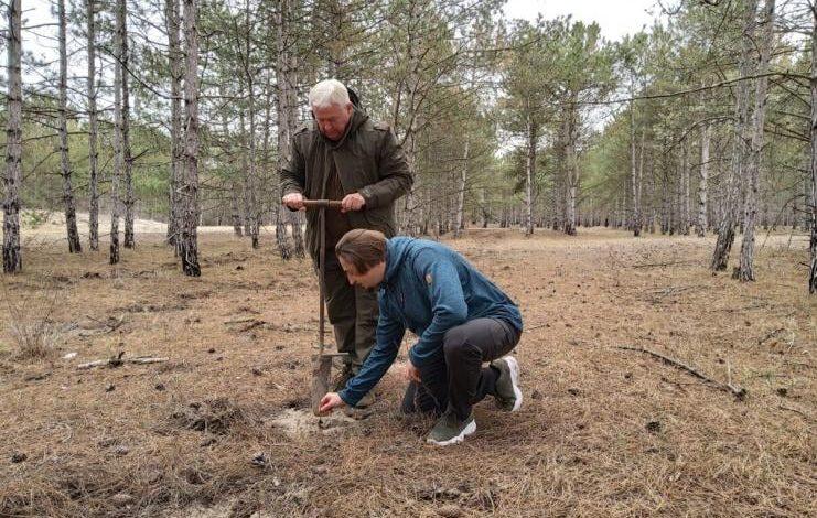 На юге Одесской области в Жебрияновской бухте высадили дубы