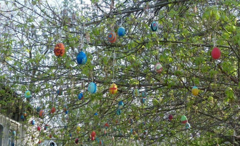 В центре Сараты появилось необычное дерево (фото)