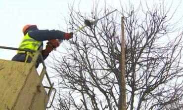 В центре Одессы ограничили движение из-за обрезки деревьев