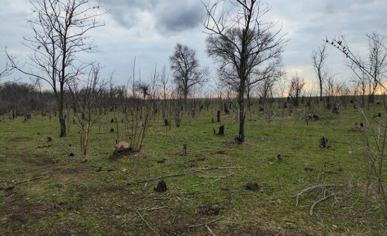 В Арцизской громаде исчезают зелёные зоны (фотофакт)