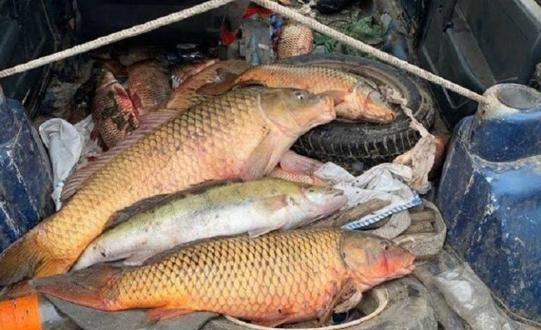 На Днестровском лимане задержали браконьеров (фото)