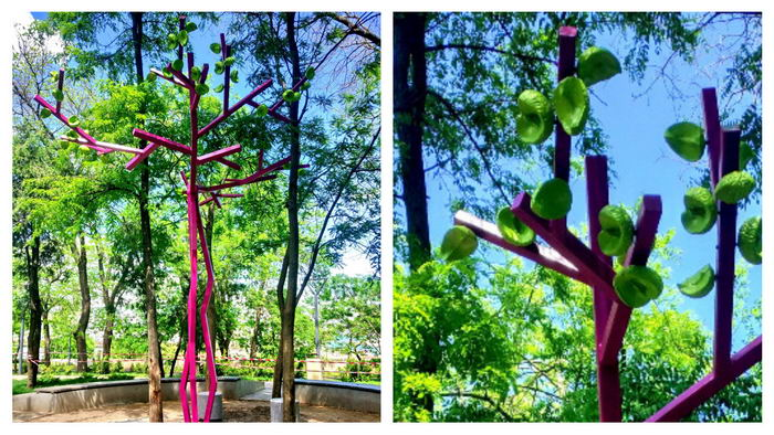 В Греческом парке появилось розовое дерево
