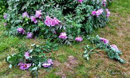 Посетители одесского ботанического сада обрывают растения ради фото