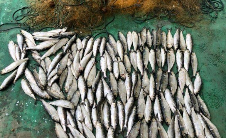 В Нижнеднестровском нацпарке браконьеры наловили дунайки на 200 тысяч