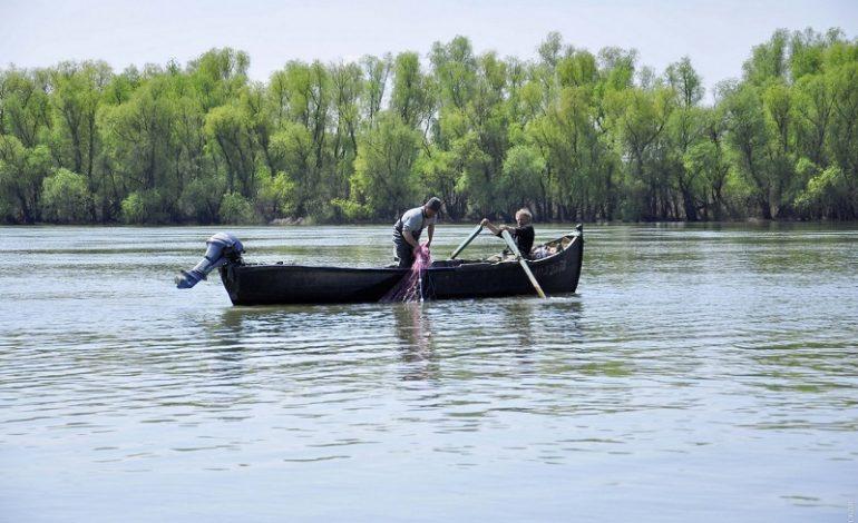 На Дунае возобновили добычу сельди после десятидневного запрета