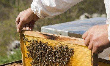 В Рени создали постоянную комиссию по установлению факта отравления пчёл
