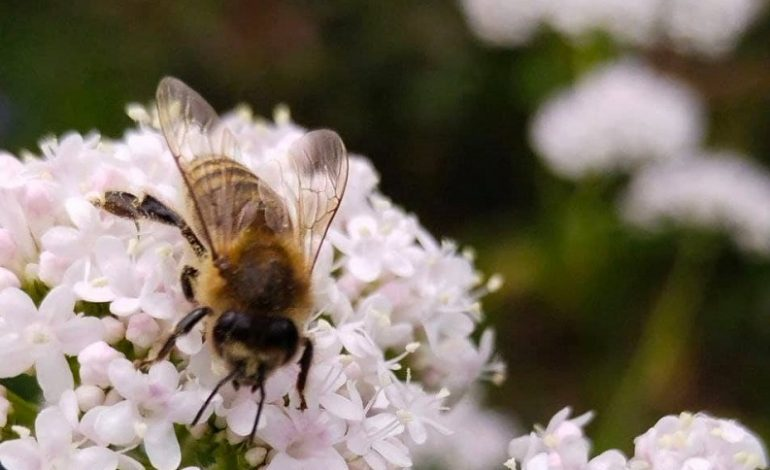За миг до лета в Одесском ботаническом саду (фото)