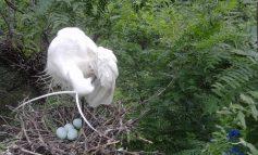 На юге Одесской области сфотографировали уникальных белых птиц (фото)