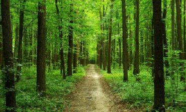 В Одесской области реорганизуют госпредприятия лесного хозяйства