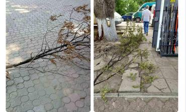 В Арцизе падают ветки, нет уличного освещения - коммунальные службы не реагируют
