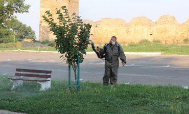 В Белгороде-Днестровском спасают деревья от белой бабочки (ФОТО)