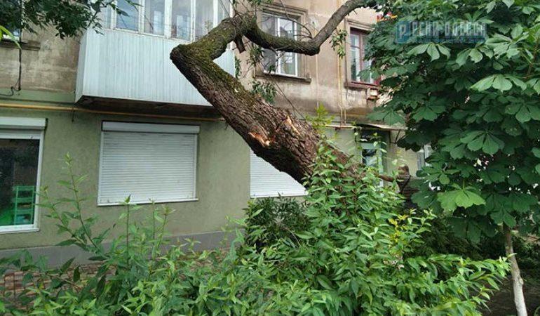 В Рени огромное дерево обрушилось на многоквартирный дом (фотофакт)