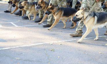 Служебные собаки Измаильского погранотряда пройдут на параде по Крещатику (фото)