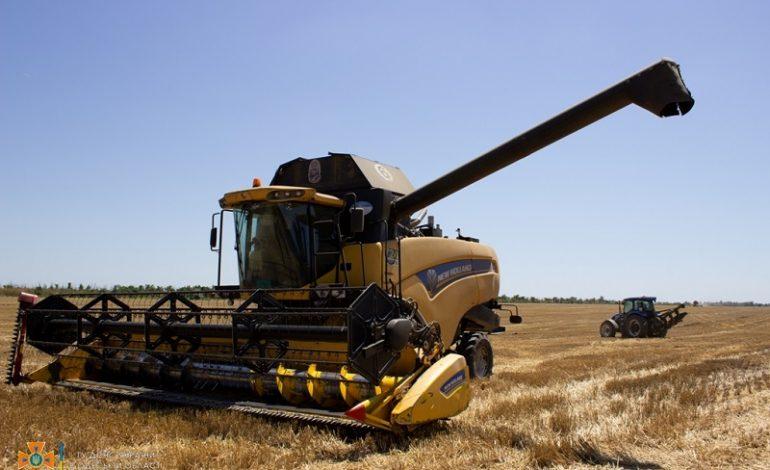 В Одесской области фермеры потеряли треть урожая озимого ячменя