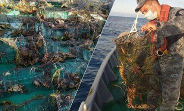 На Одесском побережье свыше тысячи черноморских крабов оказались в ловушке