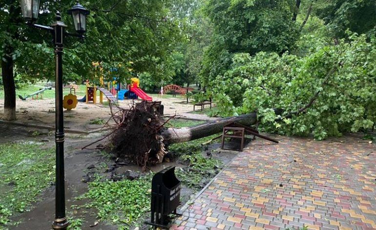 Град и поломанные деревья: на севере Одесской области бушевала гроза