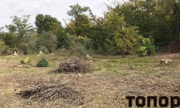 В Болграде варварски уничтожаются деревья