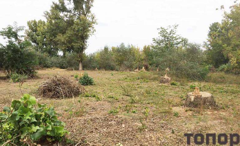 В Болградском лесничестве прокомментировали вырубку деревьев в Табаках