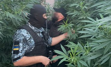 Измаильчанин выращивал коноплю в теплице и хранил пистолет (фото)