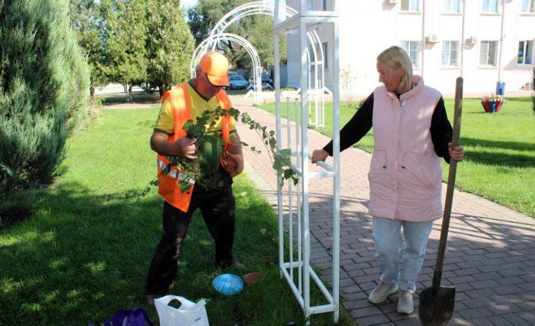 Как  Белгород-Днестровский «озеленяется» накануне Дня города