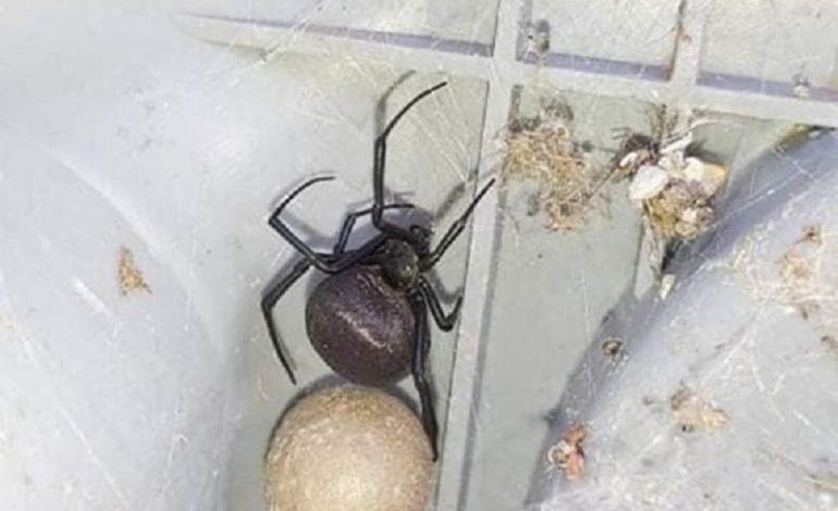 Житель Измаила обнаружил во дворе ядовитого паука