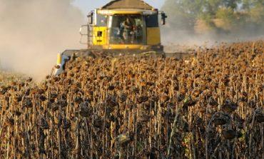 В Болградском районе собирают урожай подсолнечника