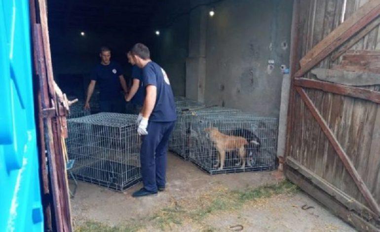 В Арцизе начали стерилизовать бродячих собак