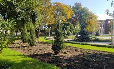 В Измаиле завершилась осенняя высадка деревьев