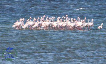На юге Одесской области заметили стаю экзотических птиц (фото)