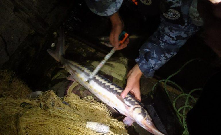 На Дунае задержали браконьеров, которые ловили краснокнижных рыб