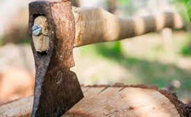 В Килийской громаде черные лесорубы опустошают посадки